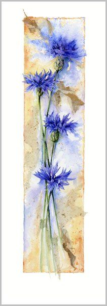 watercolor painting by Jan Harbon ... tall and thing ... Bachelor's Buttons ... luv it!
