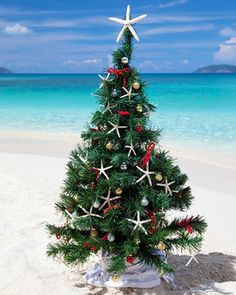 christmas+pictures+on+the+beach+ideas+family | christmas tree on the beach