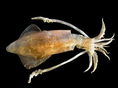 Spiders and Squid Could Help Solve Our Global Plastic Problem The Ocean, Global Plastic, Plastic Problems, Dream Meanings, Cuttlefish, Image Of The Day, Philippines Travel, Underwater World, Marine Life