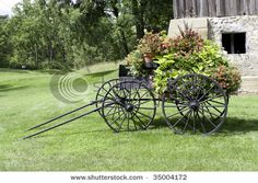 Flower pots in an old horse buggy.