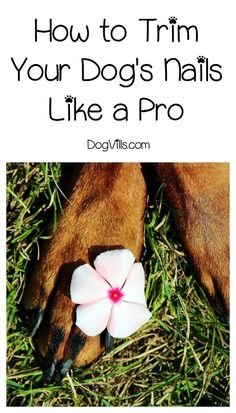 When it comes to dog healthy tips, the feet are often overlooked. Check out our paw care tips for healthy, happy pooches! Dog Health Tips, Dog Health Care, Health Advice, Cat Care Tips, Pet Care, Puppy Care, Pet Tips, Trimming Dog Nails, Cheap Pets