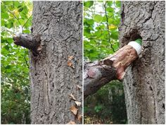 Tree branch #geocache in Aladar123 plays #geocaching blog