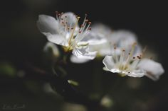 Blossom - Catching the light of spring...