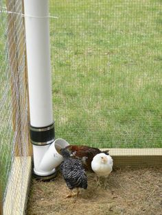 The best chicken feeder ever - I made it out of PVC from Home Depot. No mess and a minimal footprint to maximize floor space in the chicken coop. by vera