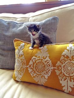 Im not sure if this photo is suppose to be about the pillow or the cat. I chose to see the cat and its so friggin cute!