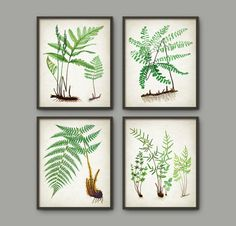 Fern Botanical Wall Art Print Set of 4 - Vintage Fern Illustrations - Fern Book Plate Prints -Fern Botanical Prints - This set of 4 posters is printed using high quality archival inks on heavy-weight archival paper with a smooth matte finish. Botanical Wall Art, Botanical Prints, Ferns, Wall Art Prints, Gallery Wall, Artsy, Handmade Gifts, Frame, Vintage