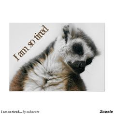 "I am so tired... poster,  am so tired, so tired, ringstaart maki doet een dutje, schattig op allerlei produkten voor kinderen, maar ook voor volwassenen die graag een tukje doen I'm so tired... And so cute , So tired, Tired, ""ring-tailed lemur"" ""taking a nap"" sleeping, sleepy, cute, animal, monkey, apes, ape, monkey, monkeys, photo, Nature, shhh, lemur, children, baby's, I'm so tired..., Zo moe, moe, ""ringstaartmaki"" ,dutje, slapen, dier, kinderen, baby's,, ik ben zo moe ..."