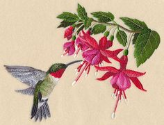 Ruby-Throated Hummingbird and Fuchsia design (M12237) from www.Emblibrary.com