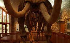 Mastodon State Historic Site   Missouri State Parks