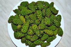 Jam szyszek sosnowych, recepta. Jak gotować zacięcie zielonych szyszek sosny w domu | Ziemia Sowietów