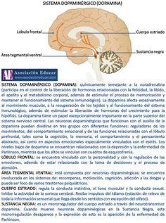 Infografía Neurociencias: Sistema de Dopamina. Material de uso libre, sólo se pide citar la fuente (Asociación Educar).