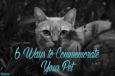 6 Ways to Commemorate Your Pet Feat. Image