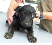 CNS Dangers of Ibuprofen   ASPCA Professional
