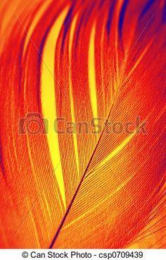 Stock Photo - Phoenix feather - stock image, images, royalty free photo, stock photos, stock photograph, stock photographs, picture, pictures, graphic, graphics