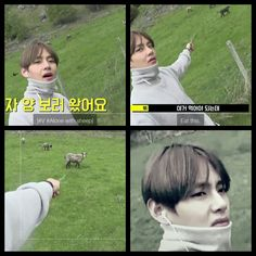 #BTS #방탄소년단 Bon Voyage Episode 3 Behind Cam ❤ Tae tryed to feed some sheep but they didn't want it.
