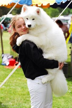 "Samoyed!! Scout is 1/2 Pyrenees and 1/2 Samoyed. They call Samoyeds ""the dogs with Christmas in their eyes."" I have always loved that."