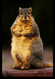 ♥ kind of a fat little squirrel