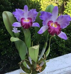 How to Care for Orchids So They Live & Grow Them Correctly So They Bloom: Learn How You Can Care for Your Orchids Quickly & Easily The Right Way Before You Kill Them Slowly & Painfully The Wrong Way Beautiful Flowers, Cattleya, Amazing Flowers, Flower Garden, Flowers, Pretty Flowers, Beautiful Orchids, Planting Flowers, Purple Garden
