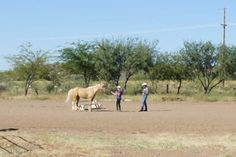 Gus giving Sue a groundwork lesson with her horse, Harper