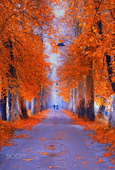 Autumn Morning - Play with colors ( Pathway - Sarajevo - Bosnia )