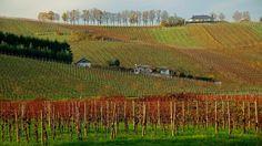 Wohnen im Weinberg, ... hat auch was. Ist beim Nachbarn in Luxenburg sicher schöner, als auf saarländischer Seite. Dafür ist die Aussicht hier besser. :-)