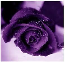 """Résultat de recherche d'images pour """"violet"""""""