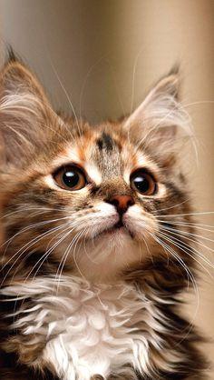Oh my what big kittie ears