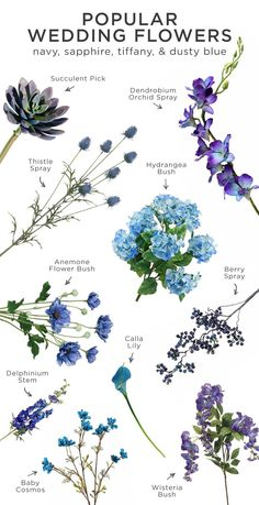 Blue is perfect for any wedding. Here is a list of the most popular wedding flowers in navy, sapphire, tiffany, & dusty blue. These flowers are perfect for luxe weddings, garden weddings, rustic weddings, modern weddings, or beach weddings.