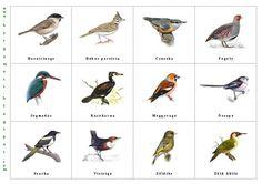 Ennek a bejegyzésnek az első része a legolvasottabb a blogon. Így gondoltam, érdekes lehet a bővítés másoknak is, ami a madarak (nálunk) e... Tree Day, Home Learning, Bird Illustration, Earth Day, Primary School, Activities For Kids, Birds, Education, Fun