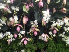 ny botanical garden | orchid show 2012 | vertical gardens