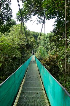Enjoy a stroll among the tree tops and discover the incredible biodiversity of Costa Rica's cloud forests