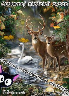 Kangaroo, Fox, Humor, Animals, Good Morning, Animais, Cheer, Animales, Animaux