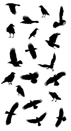 Crows Ravens, Raven Tattoo Ideas, Bird Stencil, Crow Tattoo Ideas, Black Birds, Blackbird Tattoo, Raven Outline. Flying bird stencil