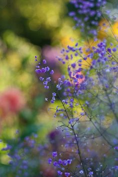 Beauty Blue – Amazing Pictures - Amazing Travel Pictures with Maps for All Around the World Beautiful Flowers Garden, Love Flowers, My Flower, Wild Flowers, Purple Flowers, Travel Pictures, Cool Pictures, Beautiful Pictures, Pot Pourri