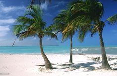 Stock Photo : Palm trees. Bahamas Islands. Caribbean (Getty images, 04/10/17)