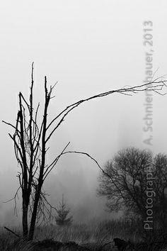 brouillard dense IE.