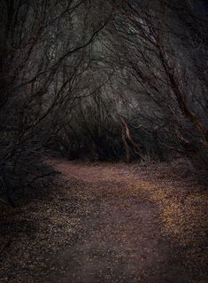 """""""This walking trail made me want to believe in fairytales."""" - Kevin Rheese"""