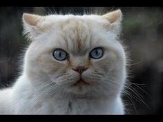 Кот Макс, любимец и баловень!