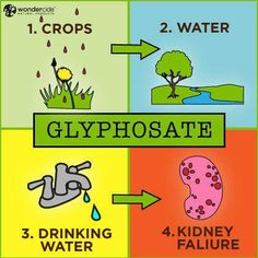 Glyphosate, which is widely marketed and sold under the Monsanto-owned brand Roundup, is linked to causing cell damage, genetic mutations, miscarriages, behavioral disorders, reproductive damage, immune disease, cancer, and death. We were well warned. http://www.naturalnews.com/041218_Roundup_glyphosate_Monsanto.html