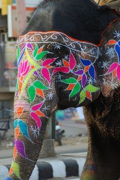 Elephant Yes! Painted elephant as getaway car (ok, perhaps a stretch, but still.) Painted elephant photographed by Vipul GaurYes! Painted elephant as getaway car (ok, perhaps a stretch, but still.) Painted elephant photographed by Vipul Gaur Indian Elephant, Elephant Love, Elephant Art, Colorful Elephant, Beautiful Creatures, Animals Beautiful, Cute Animals, Wild Animals, Beautiful Boys