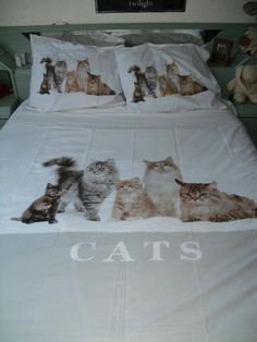 Fresh linens on the bed just in case there needs to be a few over night guests from the Fancy Feast Cat Lover's Gourmet Grilled Cheese House Party Crazy Cat Lady, Crazy Cats, I Love Cats, Cool Cats, Disney Cats, Cat Decor, All About Cats, New Beds, Cat Life