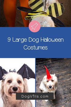 Dress your dogs (even your Great Dane) in one of these Large Dog Halloween Costumes For Boy Dogs. Dog Halloween Costumes, Boy Costumes, Large Dogs, Small Dogs, Cute Dog Collars, Diy Dog Toys, Boy Dog, Dog Accessories, Dog Treats