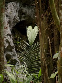 Anything random that is naturally shaped into a heart! Rainforest in Belize!