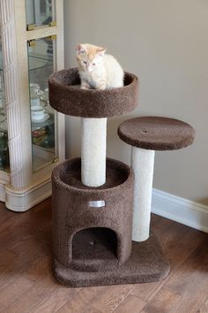 900 Cat Play Area Ideas In 2021 Cat Play Area Cat Playing Cat Furniture