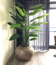 Big Potted Plants, Big House Plants, Indoor Plants, Living Room Plants Decor, House Plants Decor, Decoration Plante, Outdoor Pots, Pot Plante, Interior Plants