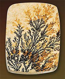 Dendritic Limestone
