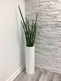 Wholesale manufacturer / supplier of fiberglass commercial & residential planters, designed in-house, produced with highest-quality materials and hand-finished. Living Room Plants Decor, House Plants Decor, Plant Decor, Tall Indoor Plants, Indoor Planters, Cheap Landscaping Ideas, Modern Planters, Office Plants, Dream House Exterior