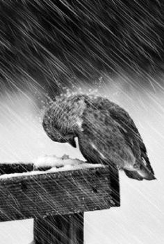 """D.H. Lawrence :""""Self-pity""""  Autocommiserazione  Non mi fu mai dato di vedere un animale in cordoglio di sè  un uccelletto cadrà morto di gelo giù dal ramo senza avere provato mai pena per sè stesso."""