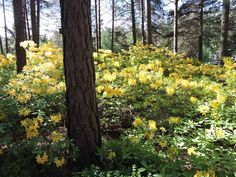 Rhododendron Park, Helsinki, Finland, Plants, Plant, Planting, Planets