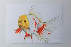 Red/white lemonhead Oranda drawing by Jennie Connelly www.solidgoldfish.com